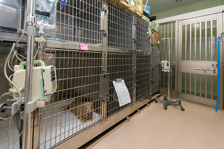 入院犬舎1